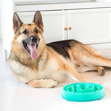Outward Hound Mangeoire lente pour chiens Slo Bowl Sarcelle 1578[5/6]