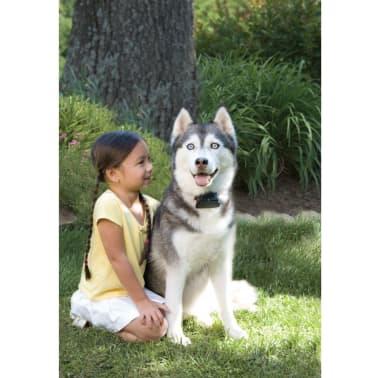 PetSafe Boden Zaunsystem Großer Hund > 3,6 kg 6091[3/4]