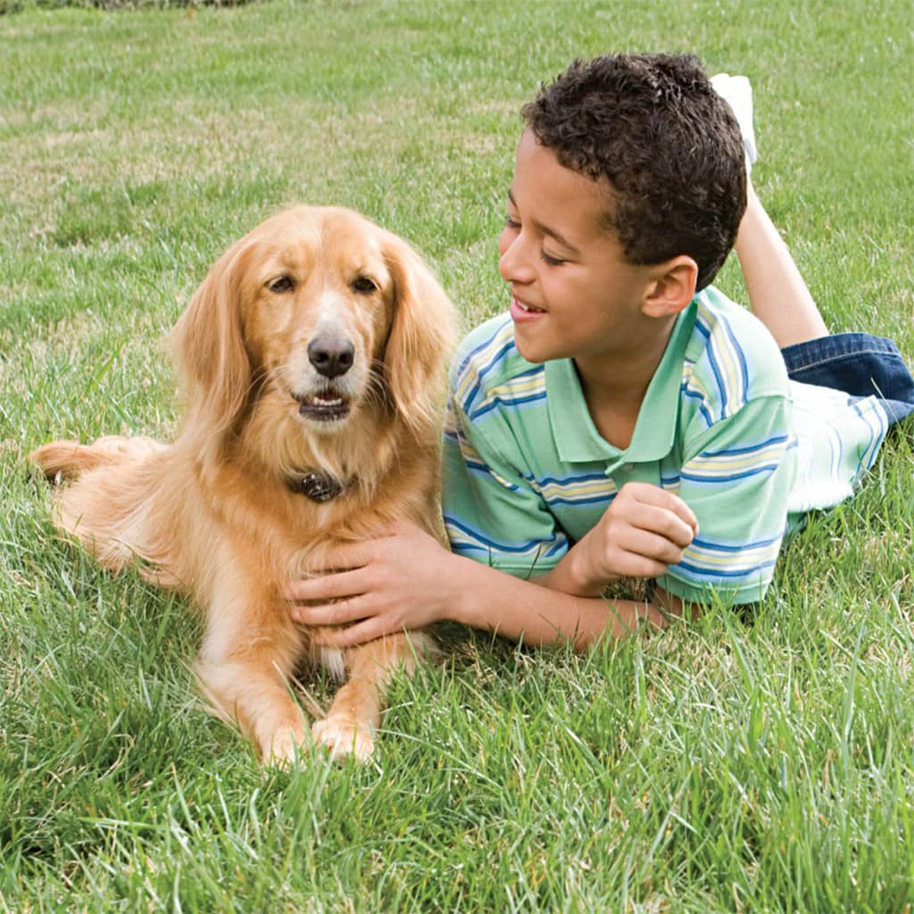 PetSafe In-ground digitale omheining voor hond boven 3,6 kg 6090