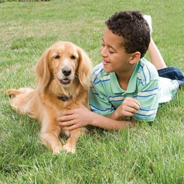 PetSafe Boden Zaunsystem Hunde > 3,6 kg 6090[3/4]