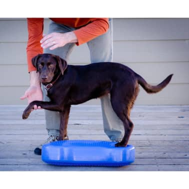 FitPAWS Plate-forme d