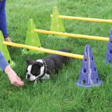 FitPAWS agility-sæt til hunde Canine Gym