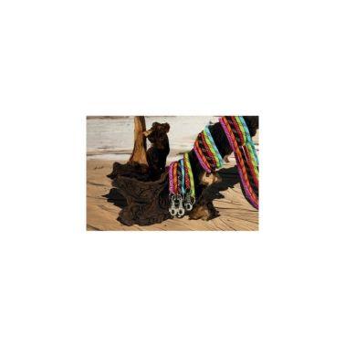 Laisse nylon® corde pour chien ls anis[1/1]