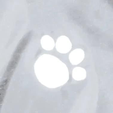 TRIXIE Imperméable pour chiens Tarbes S 42 cm PVC Transparent[4/4]