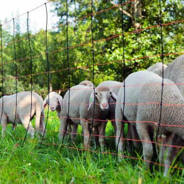 Kerbl Plasă pentru oi TitanNet, 108 cm, 27213[3/4]