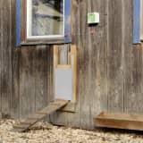 Kerbl Automatycznie otwierane drzwi kurnika, 220x330 mm, 70547