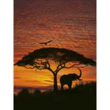 Komar Fototapeta National Geographic African Sunset, 194x270 cm, 4-501