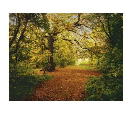 Komar Fotobehang Autumn Forrest 388x270 cm 8-068[1/4]