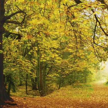 Komar Fotobehang Autumn Forrest 388x270 cm 8-068[4/4]
