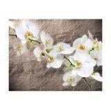 Fototapeta - Nieskazitelność orchidei