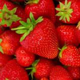 PIXIE DESIGN Napkin Strawberry 40-pack