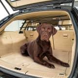 DOG CAR SECURITY