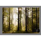 Morning Forest Fotobehang 4D (AG Design)
