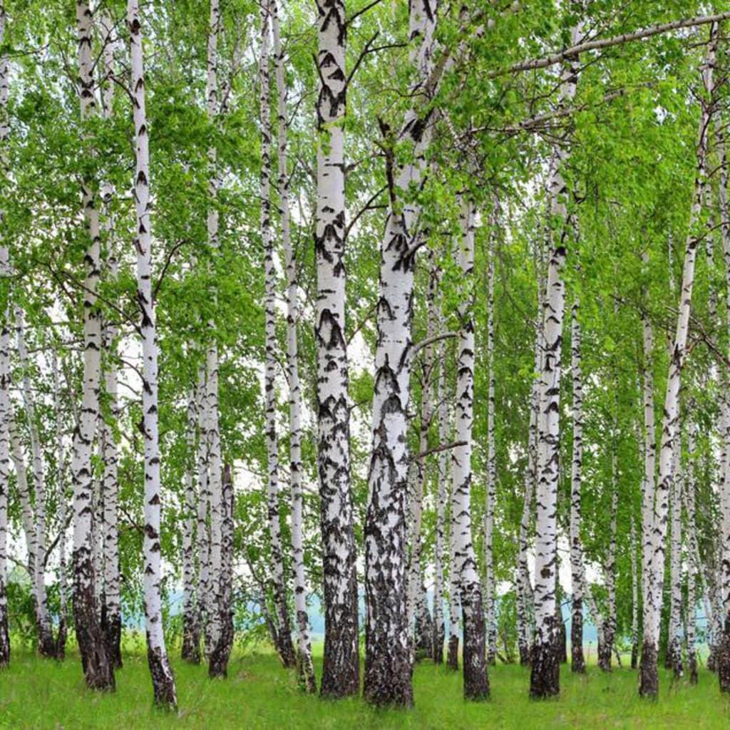 Afbeelding van AG Design Fotobehang Berry-Birch FTS1304