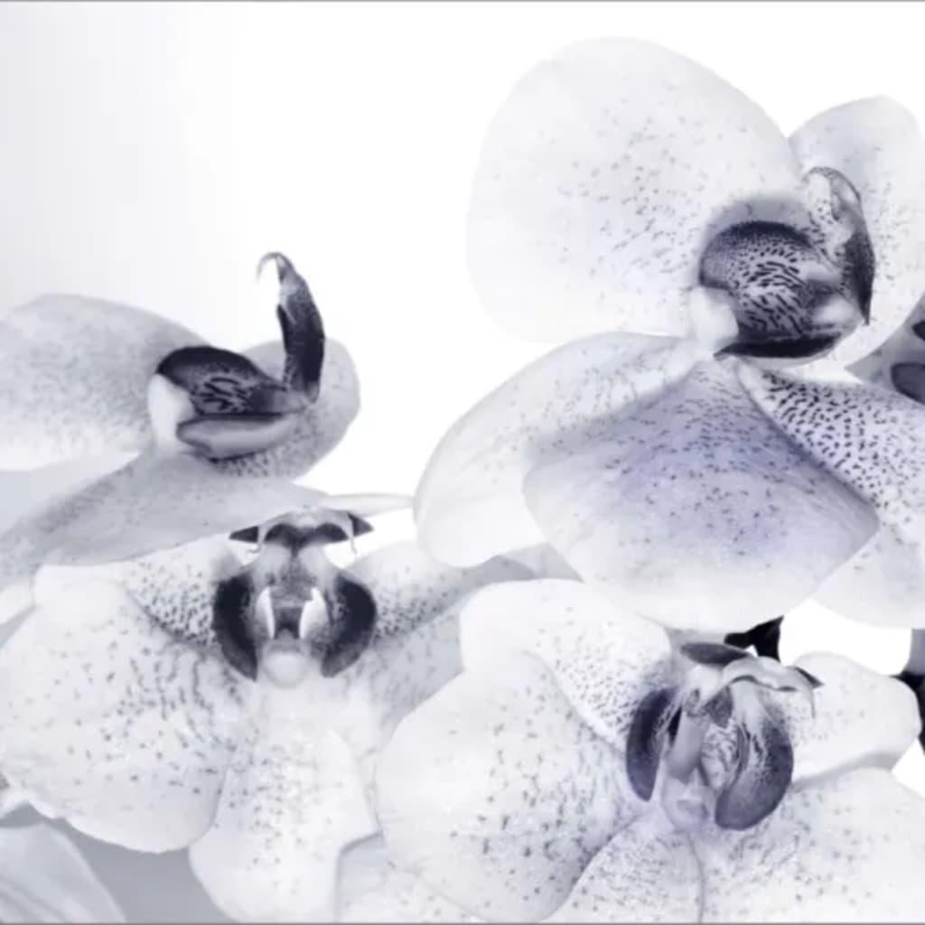 Afbeelding van AG Design Fotobehang Orchids