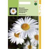 2 stuks Chrysanthemum Vernale Leuc.May Queen