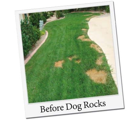 Dog Rocks Roches contre tache d'urine de chien[4/12]