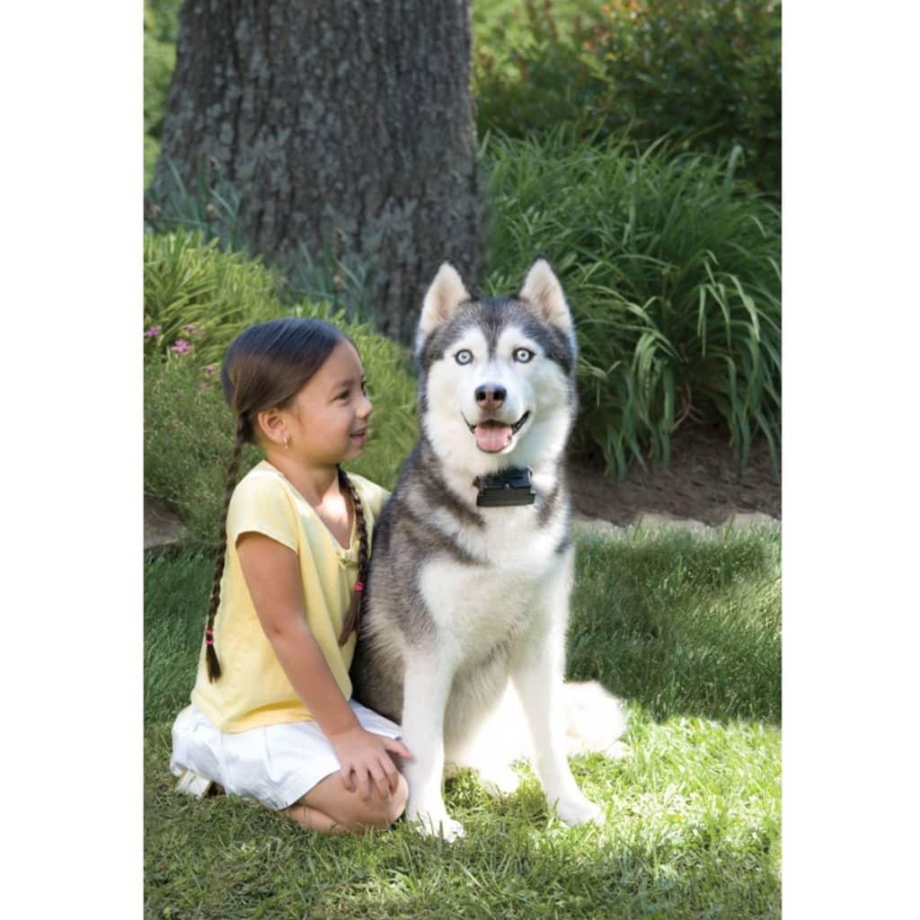 Petsafe recinto interrato grande per cani 3 6 kg 6091 for Recinto per cani taglia grande